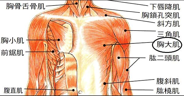 胸肌與乳房提示身體狀況
