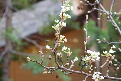 Cherry Blossom9.jpg