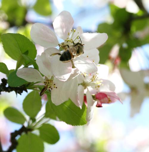 flowernbee1.jpg