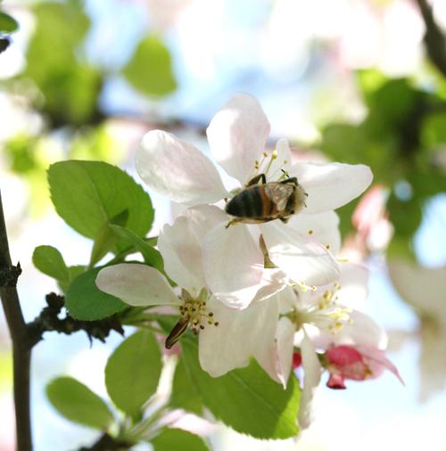 flowernbee2.jpg