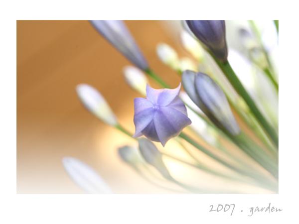 purple flower card.jpg