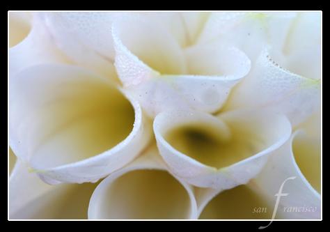Macro Flower-1.jpg