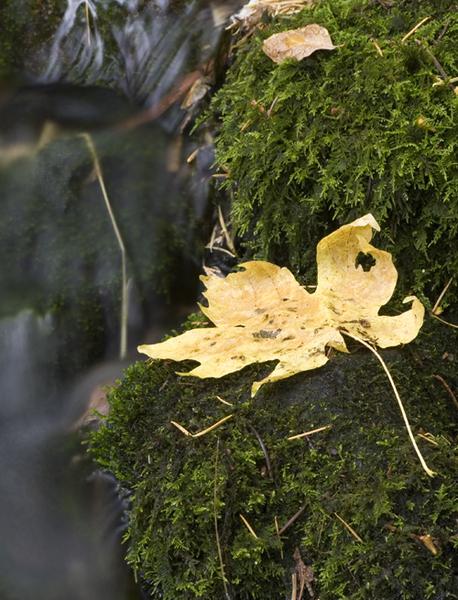 fall-yosemite-2.jpg