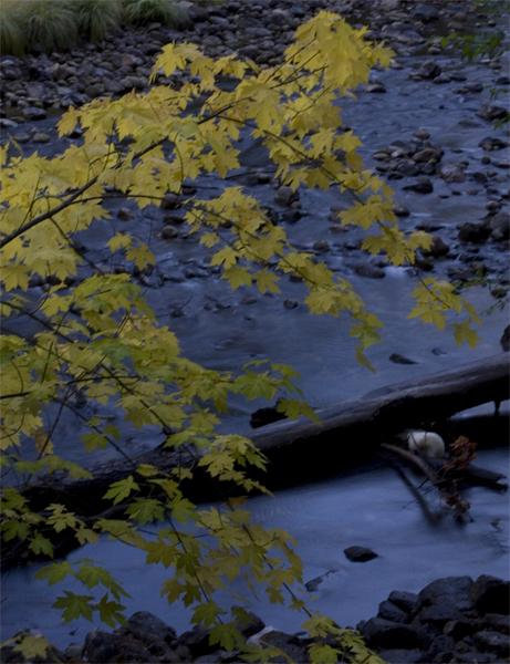 fall color-1.jpg