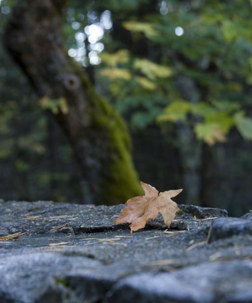 fall color-2.jpg