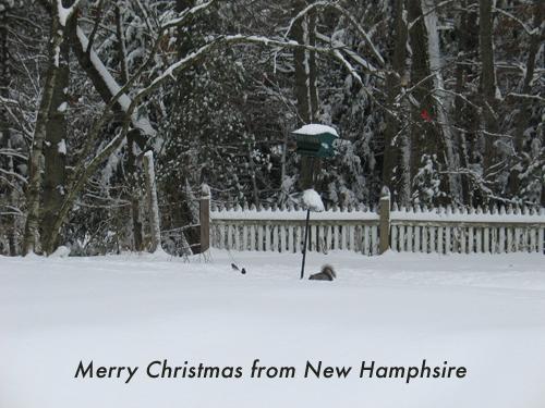 Snow NH-1.jpg