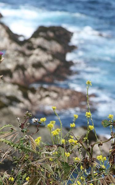 Monterey-Big Sur-5.jpg