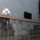 06貓.jpg