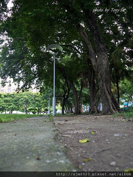 20110721-P1010077.jpg