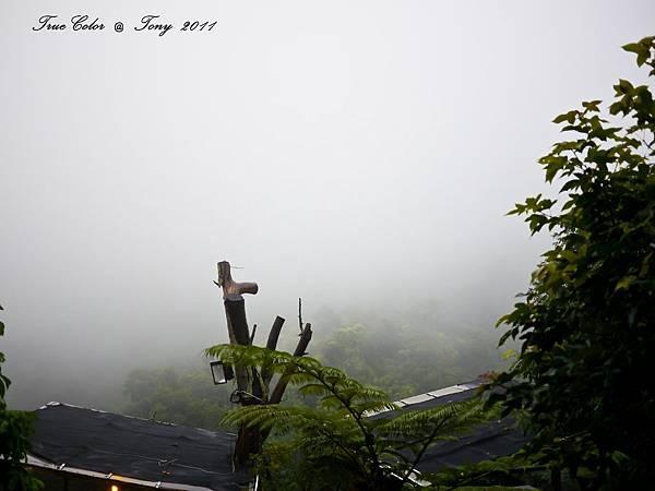 20111110-P1000022.jpg
