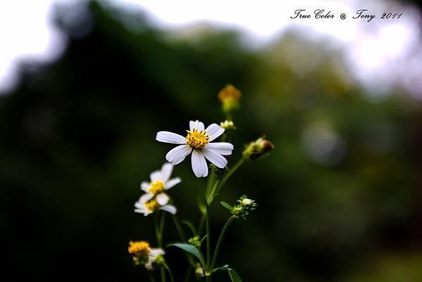 20111113-IMG_0015.jpg