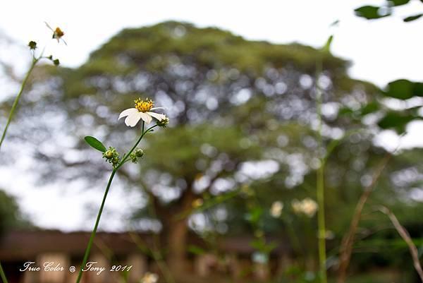 20111113-IMG_0022.jpg