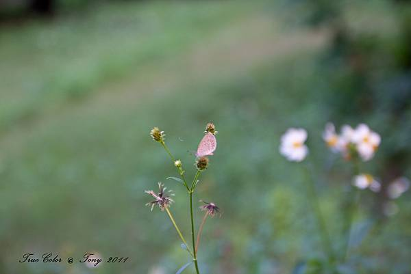 20111113-IMG_0023.jpg