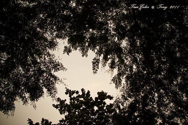 20111113-IMG_0057.jpg