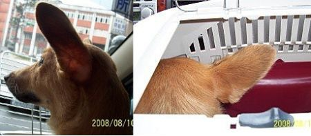 2008-08-10A-03.jpg