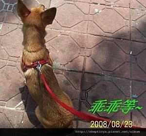 2008-08-25-05.jpg