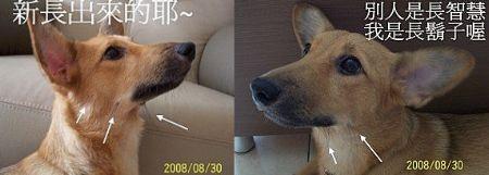 2008-09-08B-01.jpg
