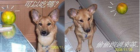 2008-12-07-01.jpg