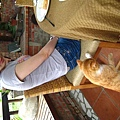 連貓都來搶食物了
