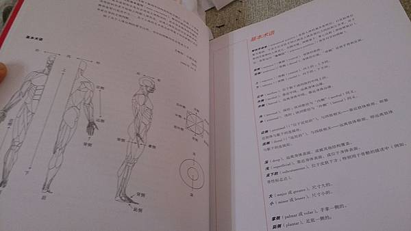 牛津藝用人體解剖學(經典版)