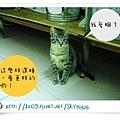 MYCAT.jpg