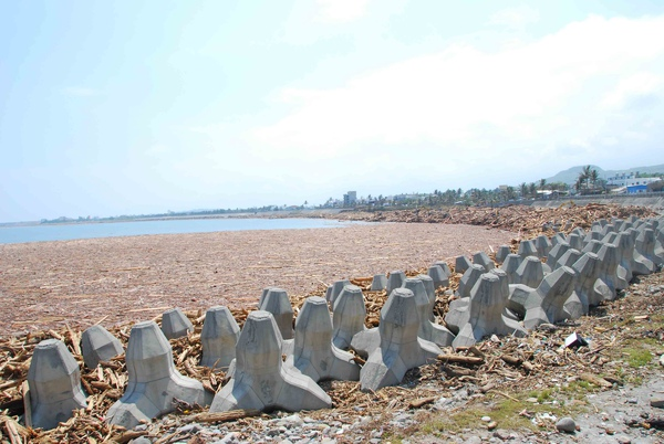 被漂流木堆滿整港的富岡漁港1.jpg