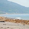 整段都是滿滿漂流木的台東海岸.jpg