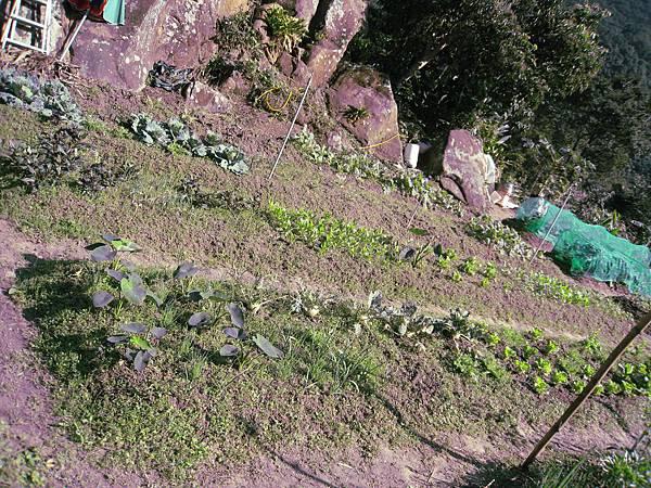 高小姐的菜園1.JPG