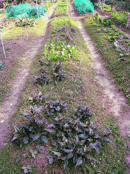 高小姐的菜園2.JPG