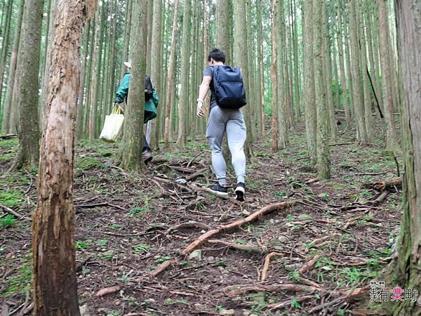 日本三重東紀州懶人包 三天兩夜行程 美食景點溫泉住宿推薦-1110382.jpg