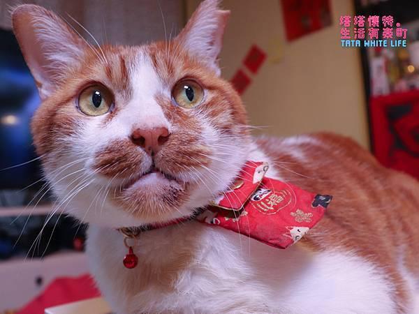 【好物開箱】台灣拜耳-蚤安、心疥爽:你以為不出門的毛小孩就不會有寄生蟲嗎?輕鬆一滴保護貓狗健康!呵護毛主子,跳蚤心絲蟲耳疥蟲線蟲都掰掰-5168.jpg