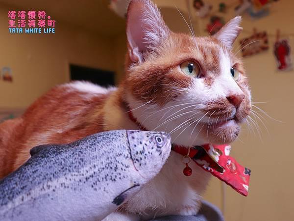 【好物開箱】台灣拜耳-蚤安、心疥爽:你以為不出門的毛小孩就不會有寄生蟲嗎?輕鬆一滴保護貓狗健康!呵護毛主子,跳蚤心絲蟲耳疥蟲線蟲都掰掰-5182.jpg