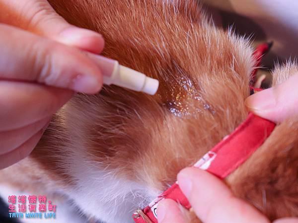 【好物開箱】台灣拜耳-蚤安、心疥爽:你以為不出門的毛小孩就不會有寄生蟲嗎?輕鬆一滴保護貓狗健康!呵護毛主子,跳蚤心絲蟲耳疥蟲線蟲都掰掰-5189.jpg