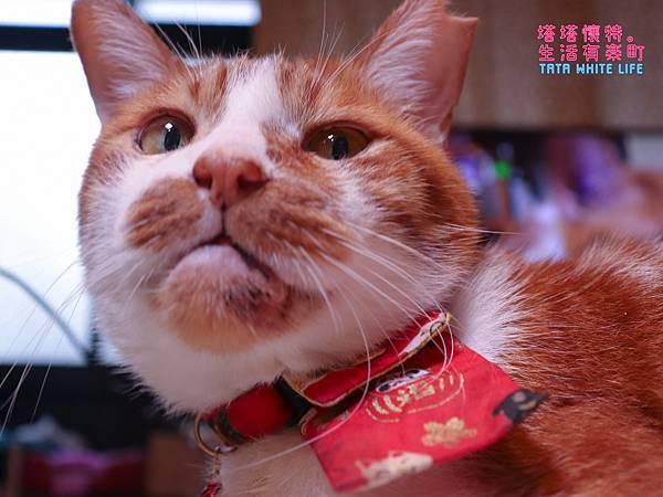 【好物開箱】台灣拜耳-蚤安、心疥爽:你以為不出門的毛小孩就不會有寄生蟲嗎?輕鬆一滴保護貓狗健康!呵護毛主子,跳蚤心絲蟲耳疥蟲線蟲都掰掰-5165.jpg