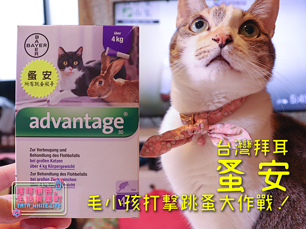 【好物開箱】台灣拜耳-蚤安、心疥爽:你以為不出門的毛小孩就不會有寄生蟲嗎?輕鬆一滴保護貓狗健康!呵護毛主子,跳蚤心絲蟲耳疥蟲線蟲都掰掰-5147.png