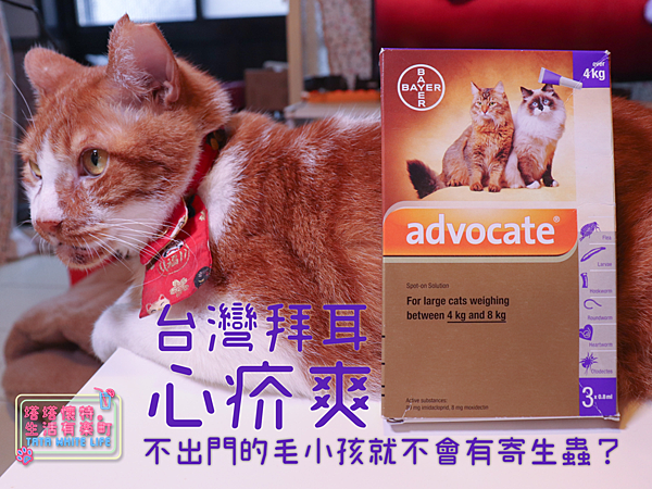 【好物開箱】台灣拜耳-心疥爽:你以為不出門的毛小孩就不會有寄生蟲嗎?輕鬆一滴保護貓狗健康!呵護毛主子,跳蚤心絲蟲耳疥蟲線蟲都掰掰