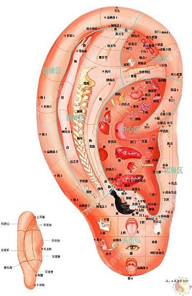 刺激耳朵反射區
