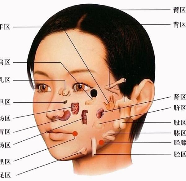 臉部反射區