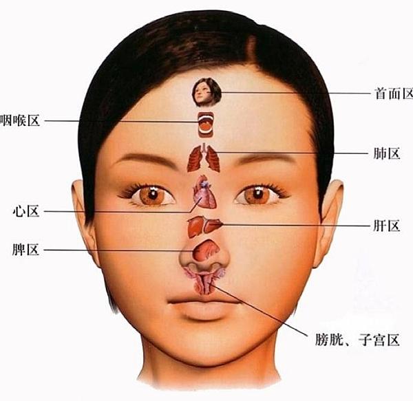 臉部反射區2