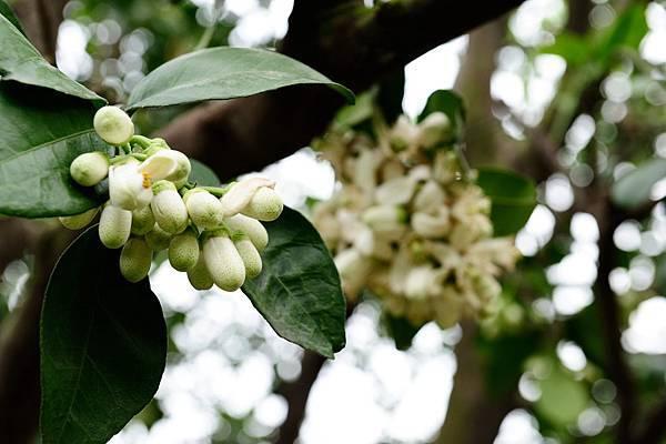 2012柚花