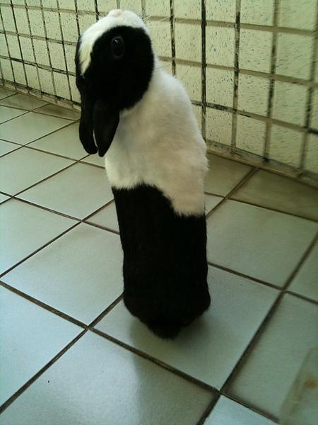 被罰站的兔子1.jpg