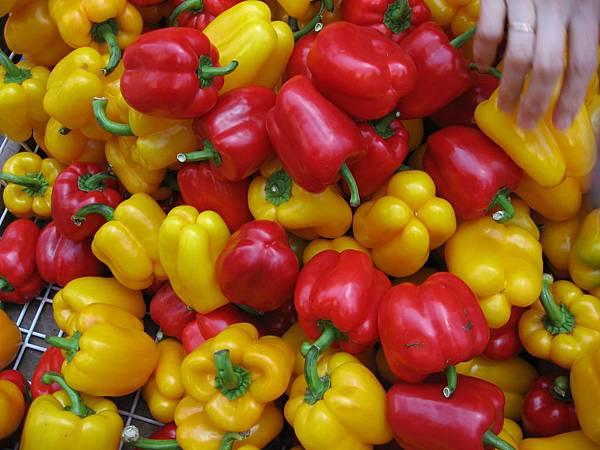 很多紅椒黃椒