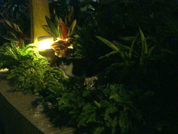 樓下的黑白貓