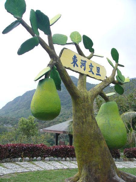 東河大柚子