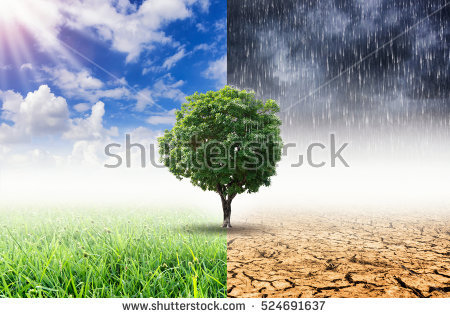 stock-photo-tree-with-environmental-change-climate-change-and-weather-change-524691637.jpg