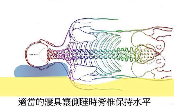 spine-257870_960_720-01