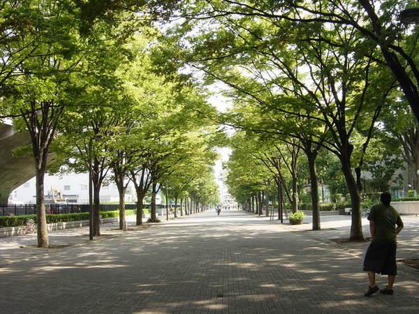 明治神宮跟涉谷間的公園