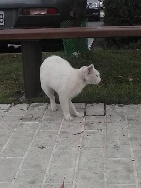 高速公路休息區發現的貓貓之二