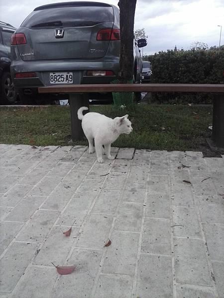 高速公路休息區發現的貓貓之三