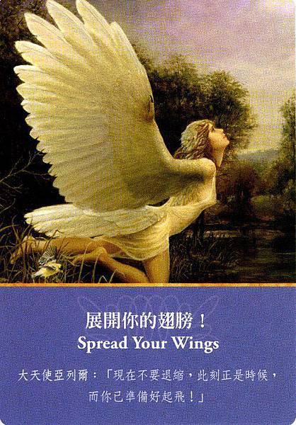 展開你的翅膀